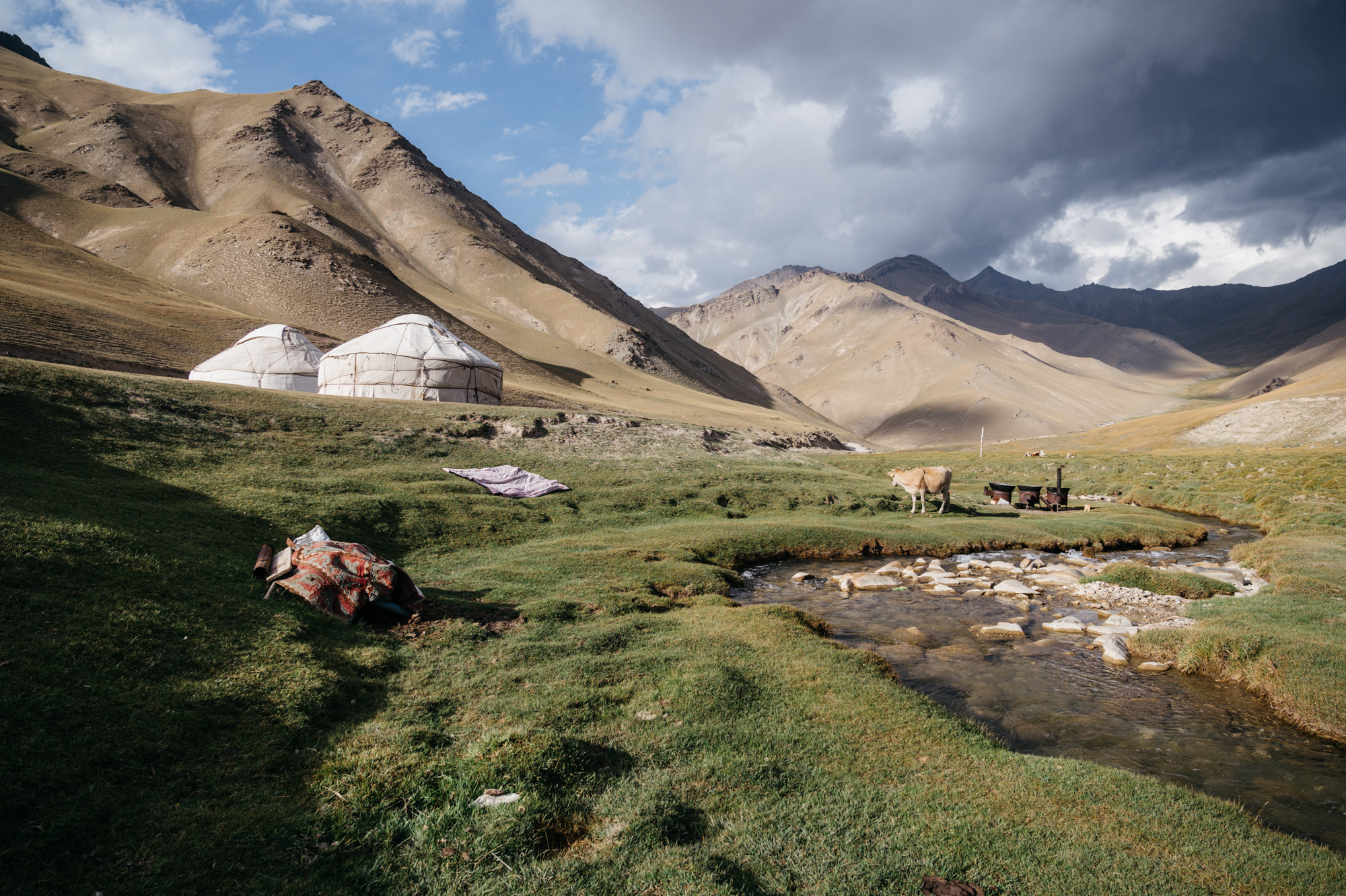 Some nearby yurts and cow by a stream.