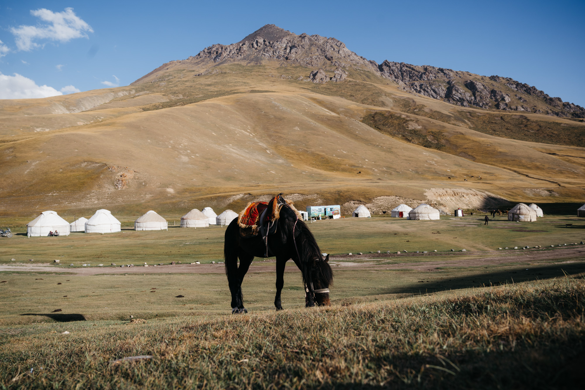 A nearby horse with some yurts in the background.