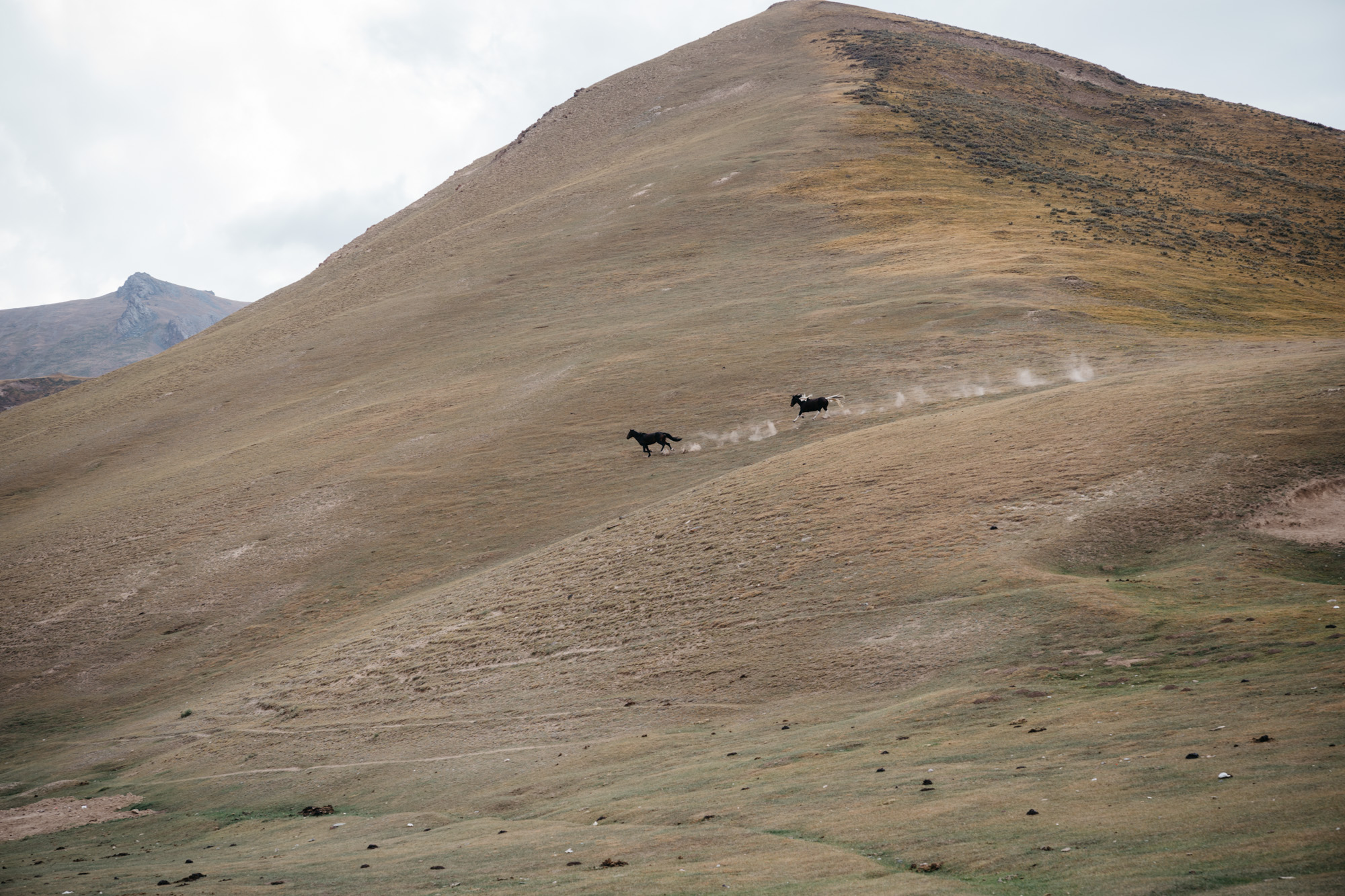 Horses belonging to the nearby villagers galloping through the mountains.