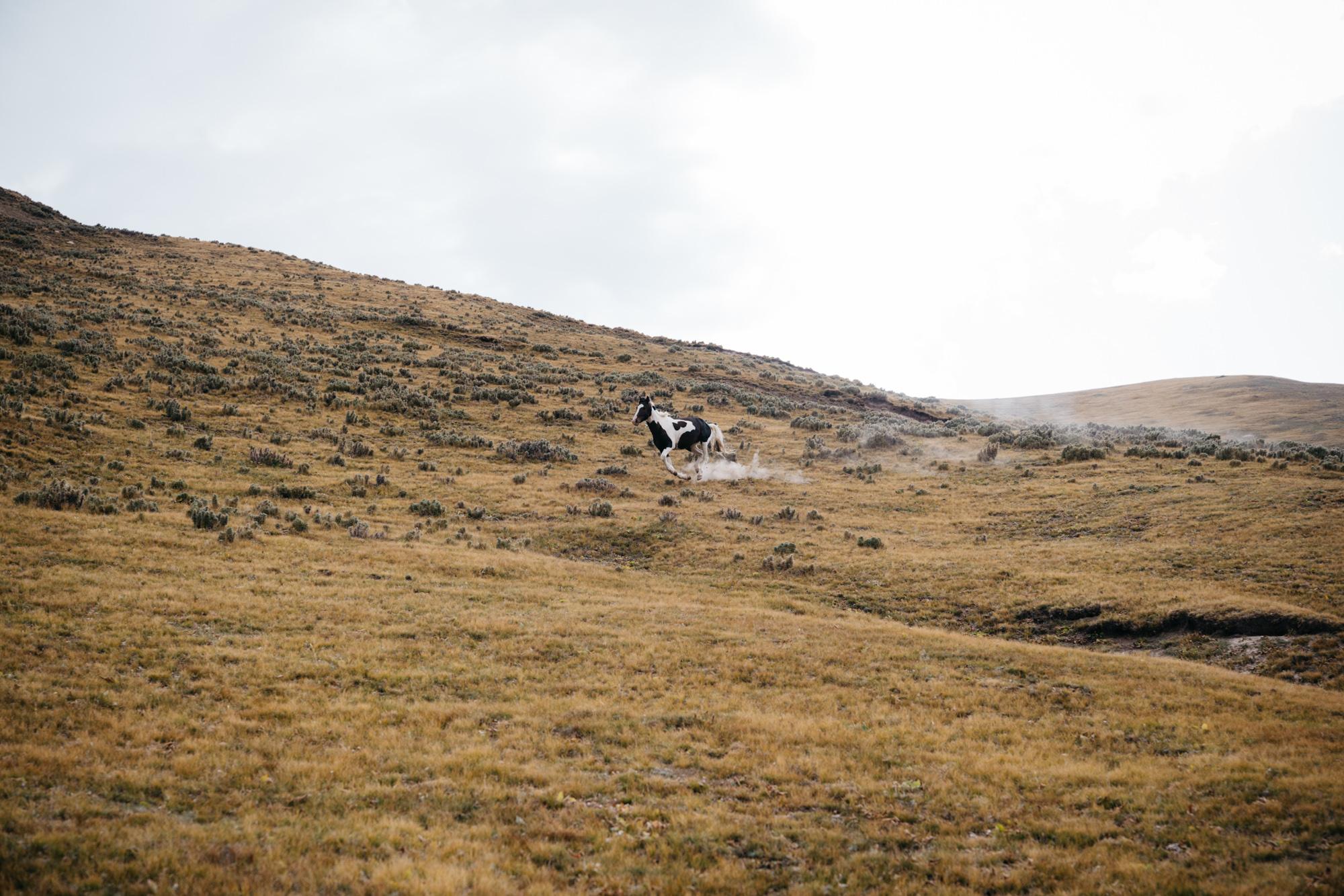 Running free and wild.